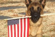 Our USA / Images from around the USA.  / by K9s for Warriors