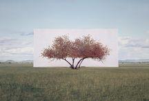 Myoung Ho Lee - Tree series
