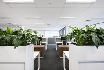 S28 PROJECT - Altegra Property Group / STATE28 is proud to showcase this amazing commercial office fit-out