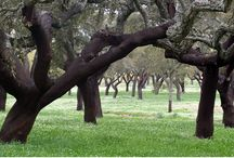 Garden in Luogosanto / Suggestions and plant selection for a new garden for a country house in Luogosanto, settled in a charming countryside among dark green cork oak groves and typical granite boulders.