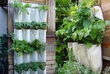 Garden / Anything related to garden, gardening