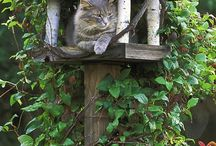 Birdhouses and Garden Accents