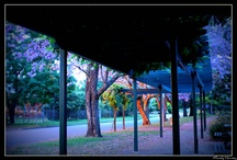 My Photography - Australia / by Mandy Harvey