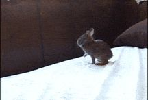 Kis nyulak