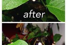 Tropical plants Unar