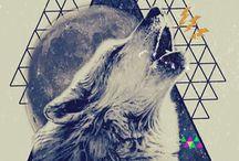 illumi wolf