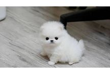 Cuuuuuute dogs / Must cute dogs in the world