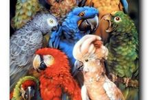 Parrots Bird Wall Decor Art Print Posters