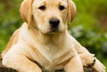 Dogs♥  o melhor amigo do homen