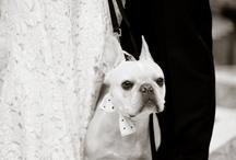 """Wedding ~ """"Photography"""" ~"""