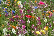 bloemen tuin maken