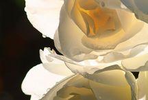 Floral whites