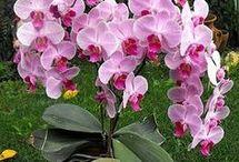orhidea kiálítås