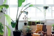 Dream Living Space