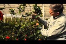 Gardening How-To's