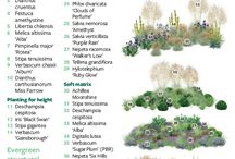 Plants for pots - containers