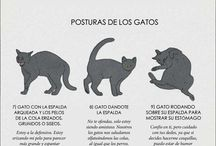 gatos lenguajes