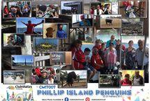 CM17007 Phillip Island Penguins