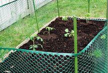 Bunny proof garden