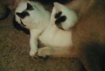 Cookie Cat, Super Cat and Chloe