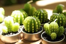 || cute cacti || / the cutest plants ever!