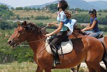 Le Catria / Élevé principalement, en semi liberté, dans les Appenins en Italie, le Catria, nommé aussi « Cheval de Catria », est une race locale, à petit effectif, qui est en danger avec moins de 500 individus répertoriés.