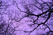 {Colour} Purple