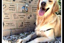 Cindy's Memorial Bark Park