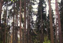 Arkhangelskoye, homestead, travel, tour / Arkhangelskoye, homestead, travel, tour