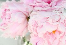 Pink Peony  / All of the wonderful things that inspire our Pink Peony fragrance