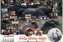 CM17033 South African Safari
