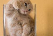 gatti_cats