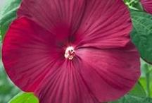 In My Garden / by Christy Kelly