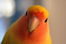 Birdies / by Cara Wolf-Vaughn