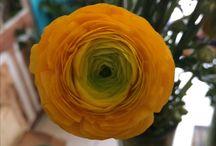 Picaflor boutique de plantas y flores / Flores - Plantas -Ideas