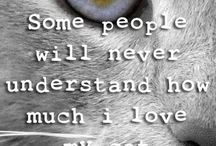 Cat Quotes / Quotes about cats #cat #quotes