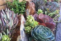 Garden Borders / Garden borders