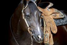 Horses / by Kristie (Tie) Marsili Kawalski