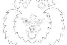 Hund Pomeranian  Spitz