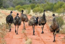 Art - Emus