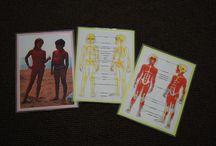 Unit: Human Body / by Seemi @ Trillium Montessori