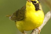 Birdwatching with Nathan Lochmueller