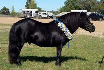 Horsey stuff - Ponies