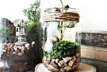 plants {terrariums}