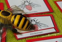Bees- Homeschool