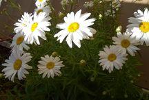 www.gantiardi.com