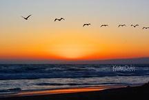 Sky / by Shelby Valdez