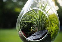 Indoor Plants, Garden and Terrace