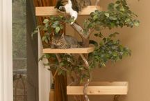 Cat trees / by Monica Pair