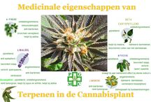medicinale cannabis / medical cannabis